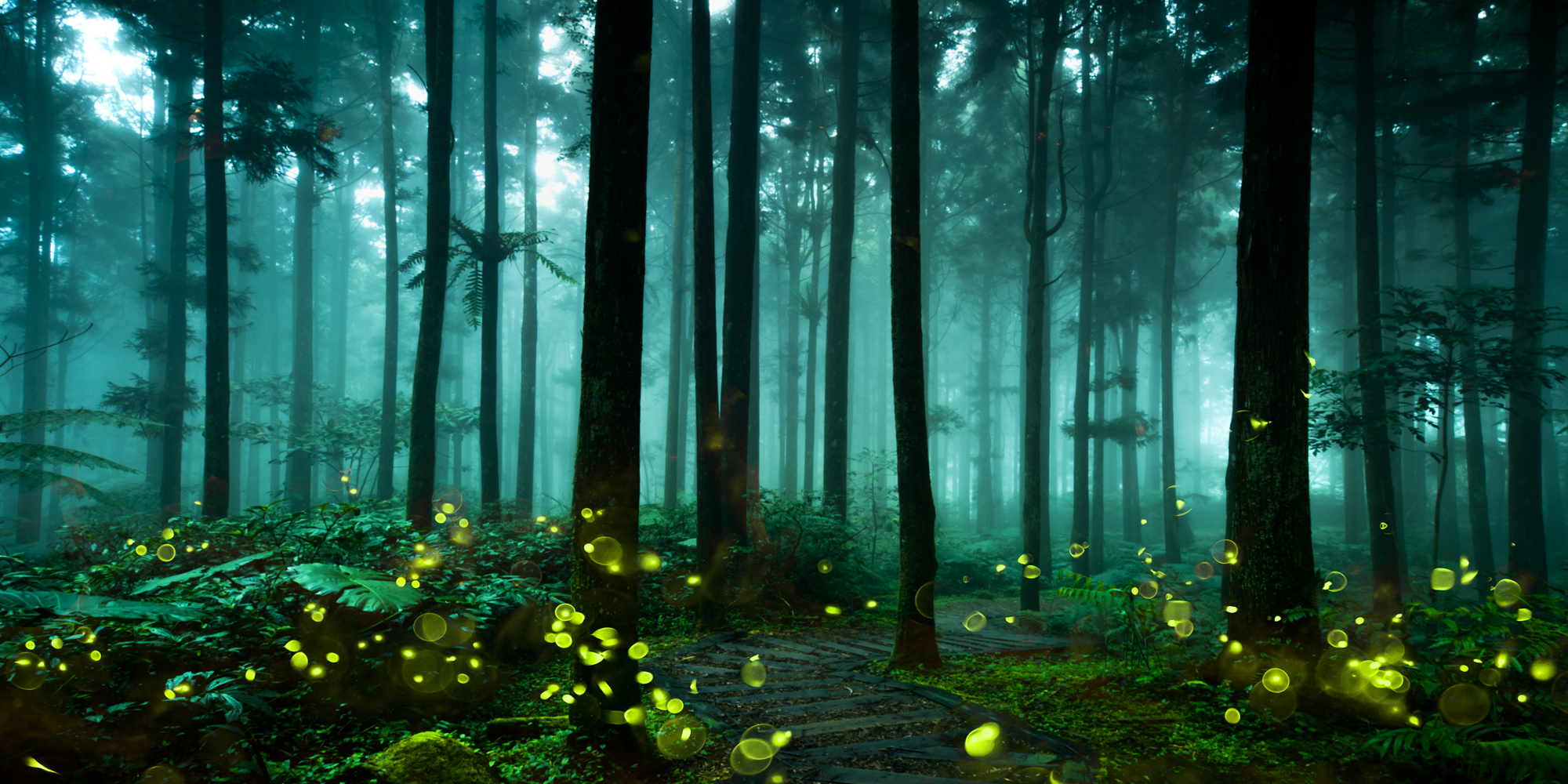 forestmagic